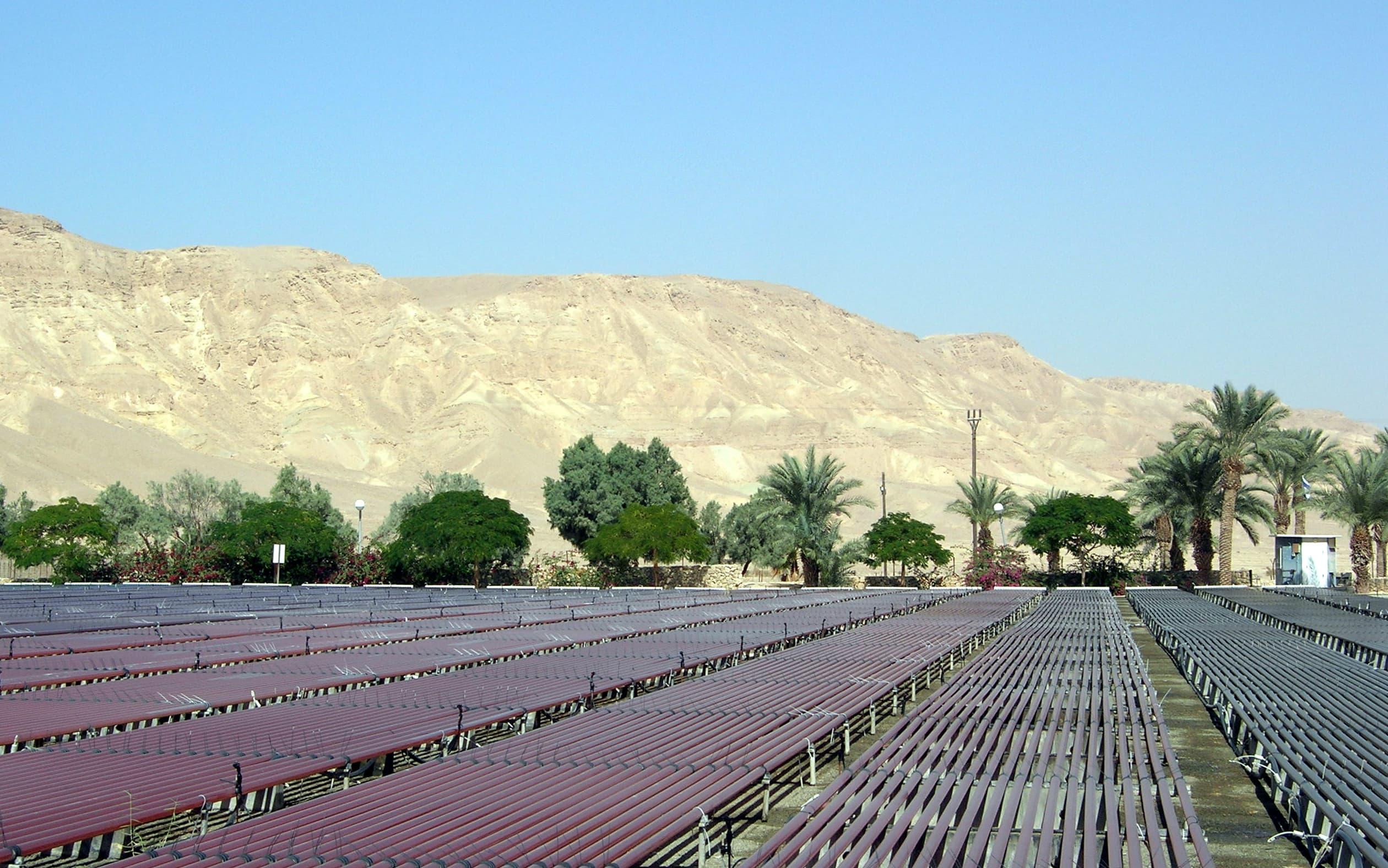 Aquaculture in Kibbutz in the Negev Desert