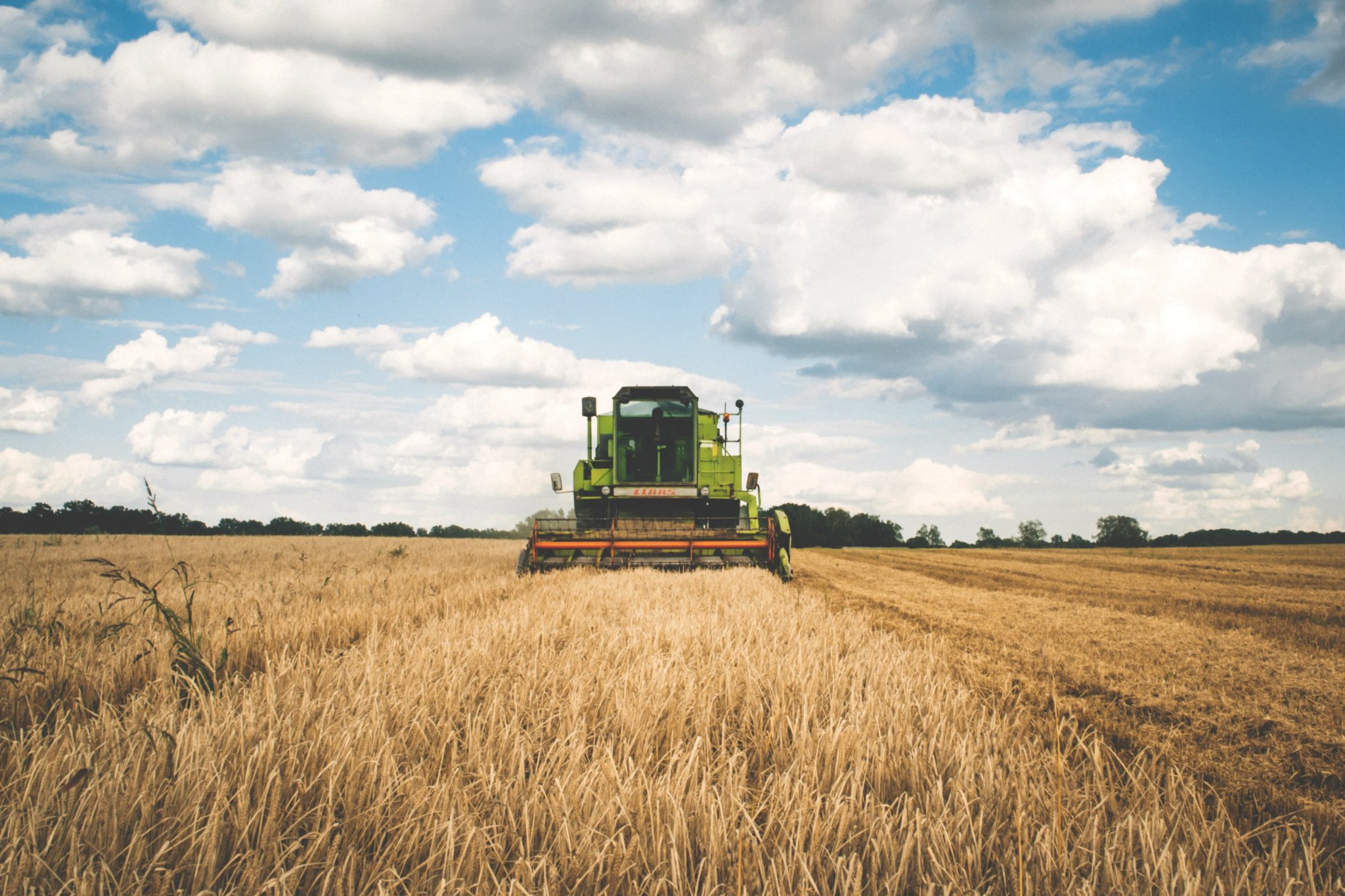 Combine harvester in crop field