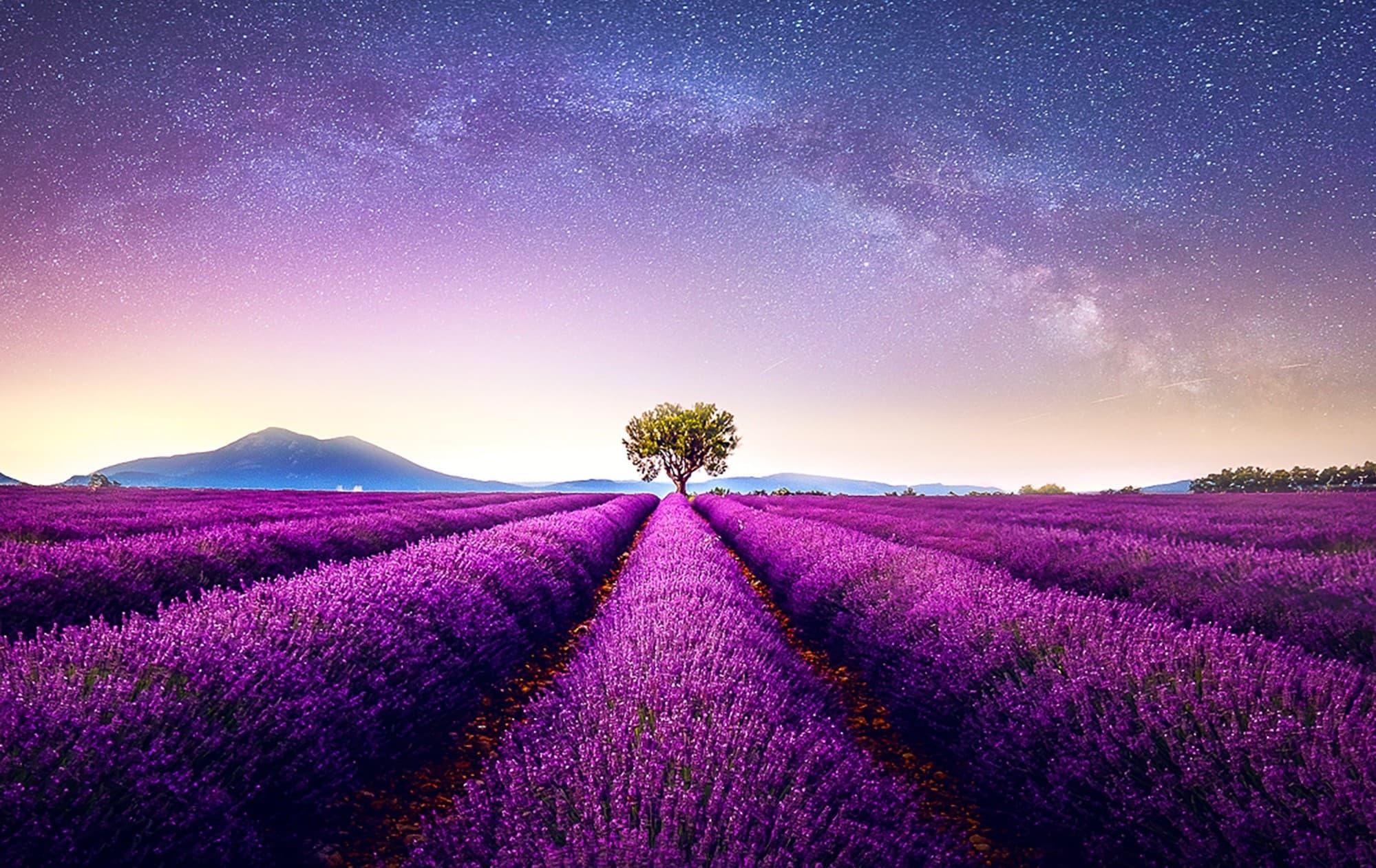 Vibrant crop landscape