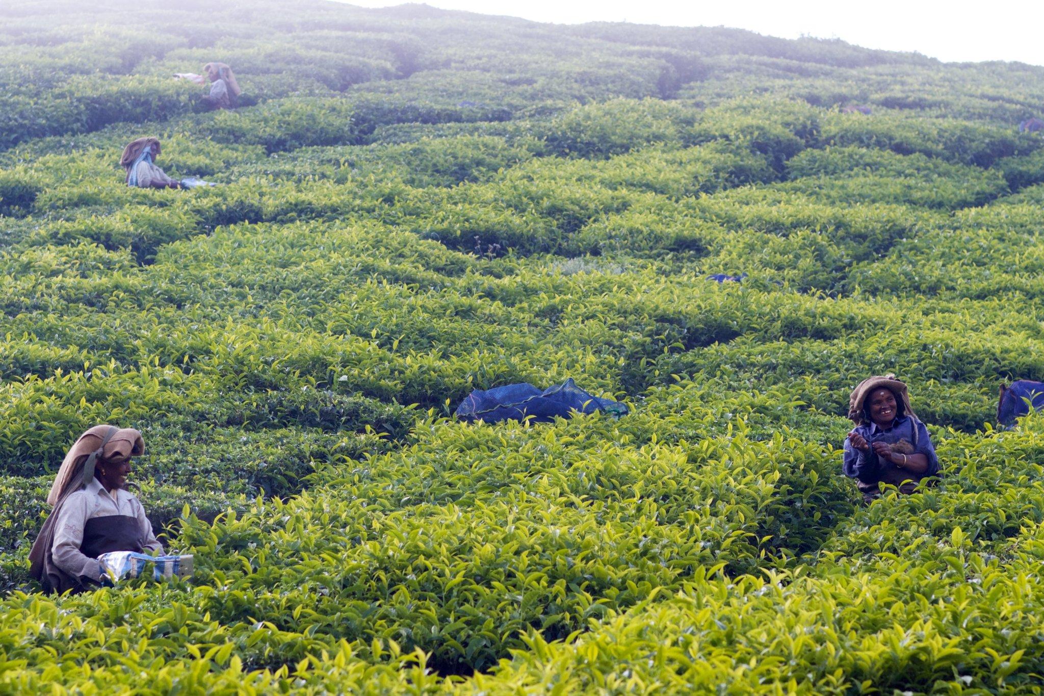 Farmers - Munnar, India