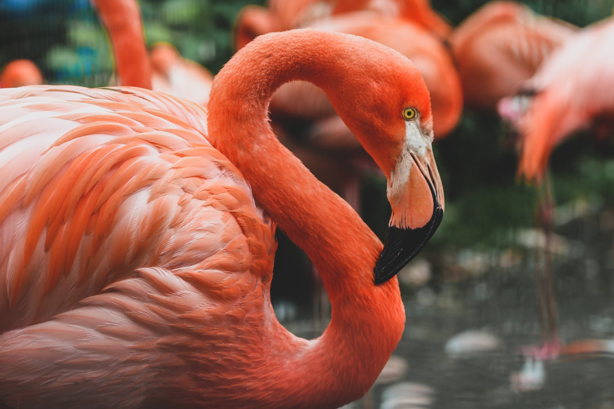 Flamingo WordPress Plugin