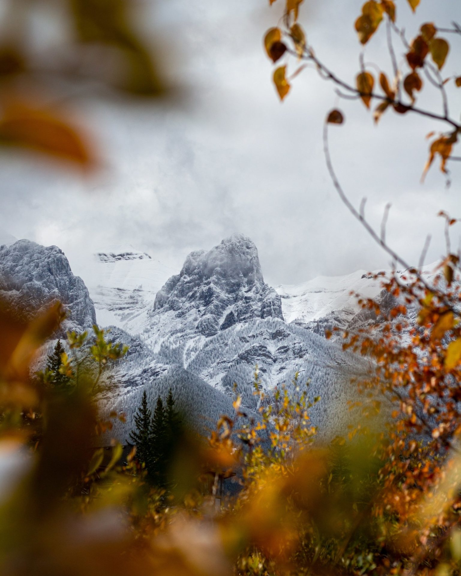 beautiful snowy mountains seen through the leaves