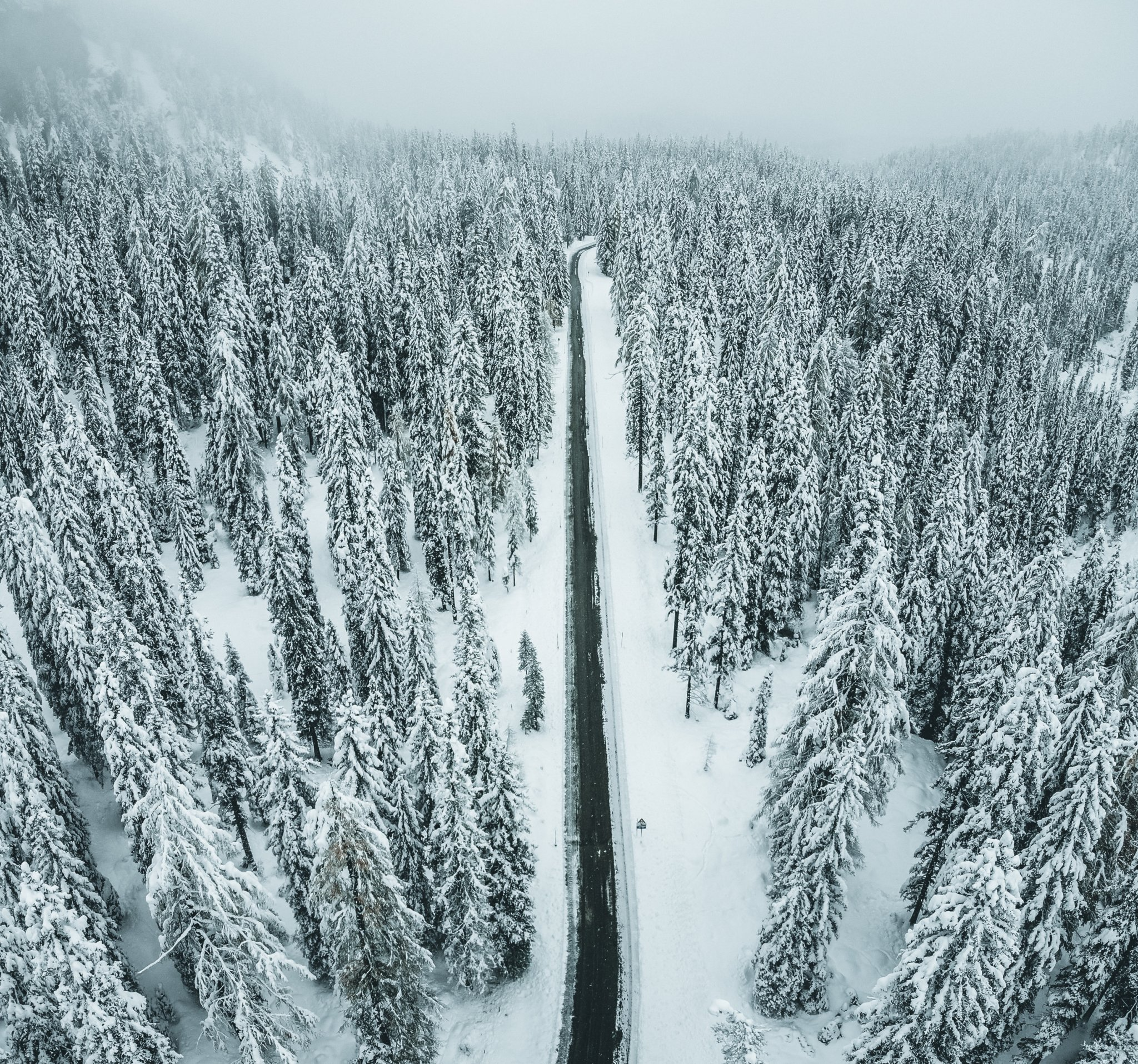 pexels photo showing a road in a snowy forest